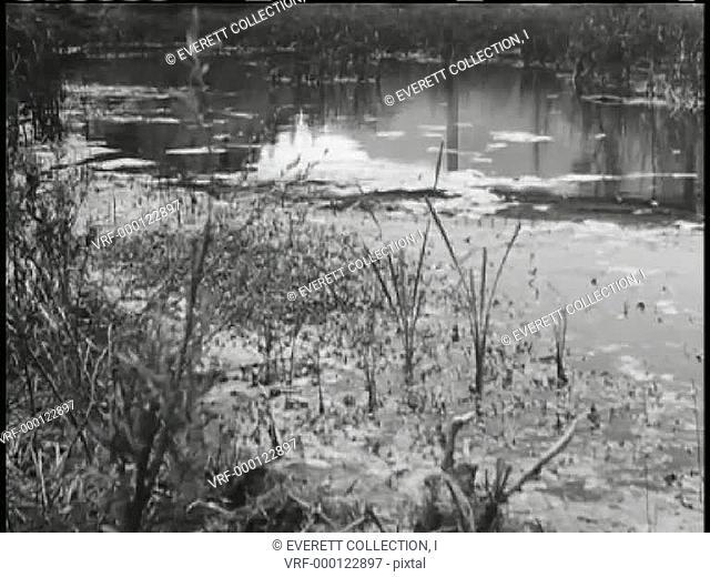 Slow panning of swamp9