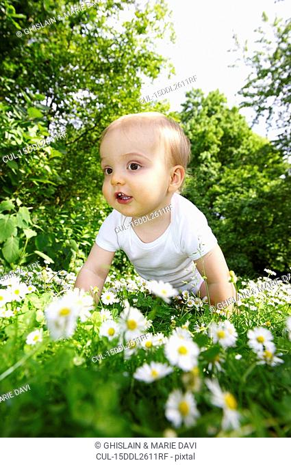 Baby boy in the daisies