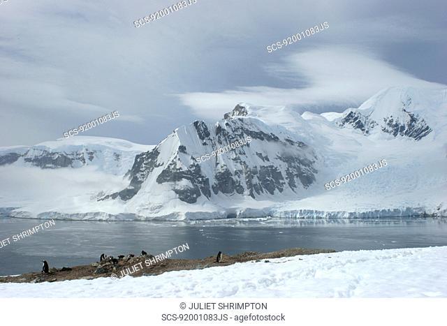 View of mainland Antarctica from Danko Island Gentoo penguin colony Antarctica RR