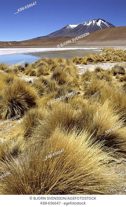 Laguna Cañapa. South Lipez, Bolivia