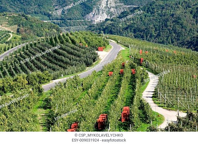 Apple orchards in mountains