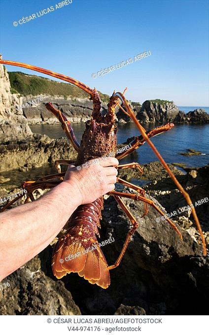 Viveros Barquereños, Lobster Hatchery. San Vicente de la Barquera, Valle del Nansa. Cantabria, Spain