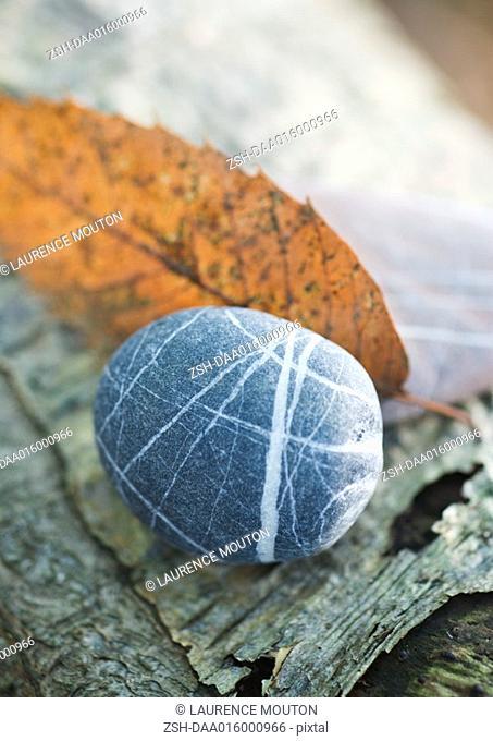 Pebble, leaf and bark