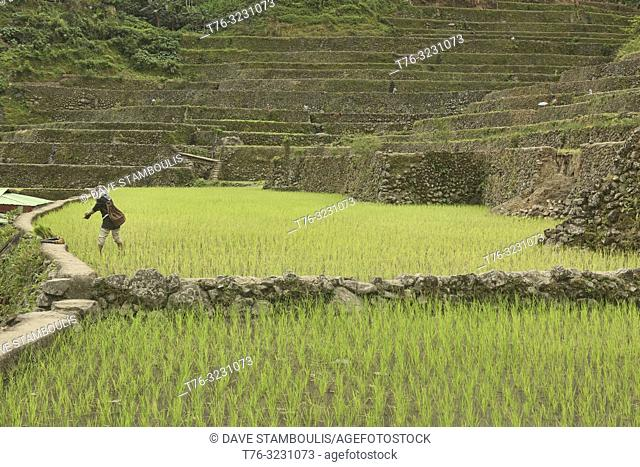 The amazing UNESCO stone rice terraces of Batad, Banaue, Mountain Province, Philippines