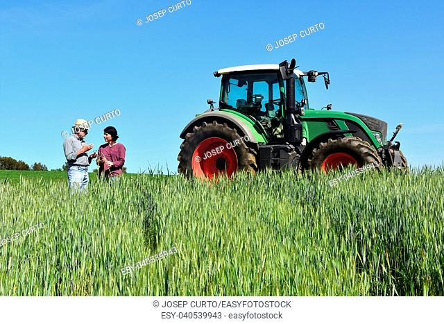 couple of farmers in a wheat field with a tractor.Porqueres, Girona province, Spain