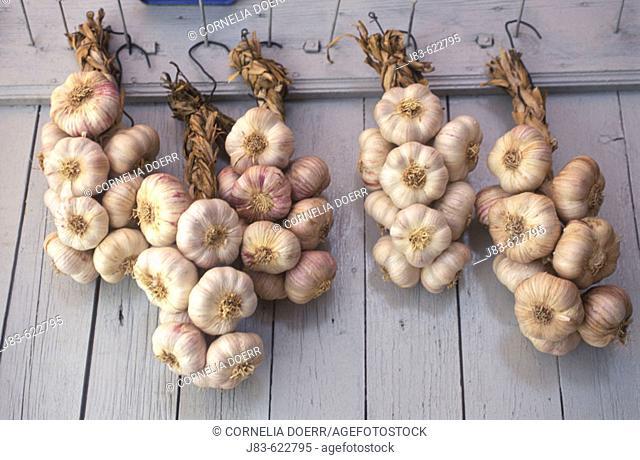 Garlics. Sault, Provence, France