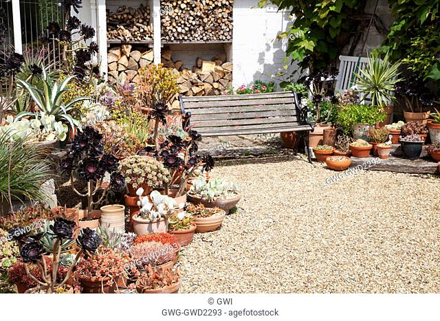 MIXED SUCCULENTS AT BETH CHATTO'S GARDEN