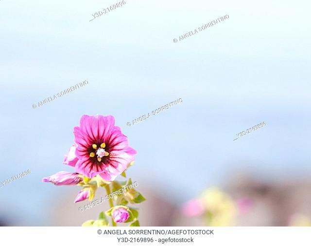 Spring flower against blue sea