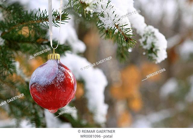 Red glass ball ornament hanging on snow covered Christmas tree