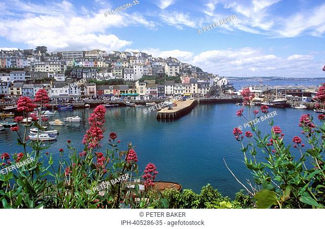 Picturesque view of the fishing port in the in the popular Torbay resort of Brixham