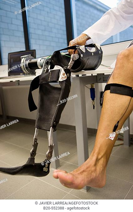 Biomechanics: researchers developing exoskeleton intended for people suffering from muscular weakness in the lower limbs