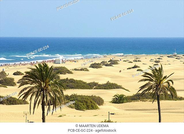 Maspalomas beach with dunes and palmtrees