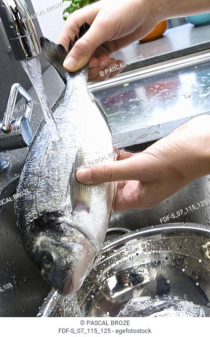 Close-up of a person's hands holding raw fish under running water