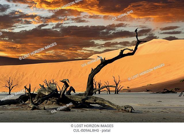 Fallen dead tree and sand dunes, Deaddvlei, Sossusvlei National Park, Namibia