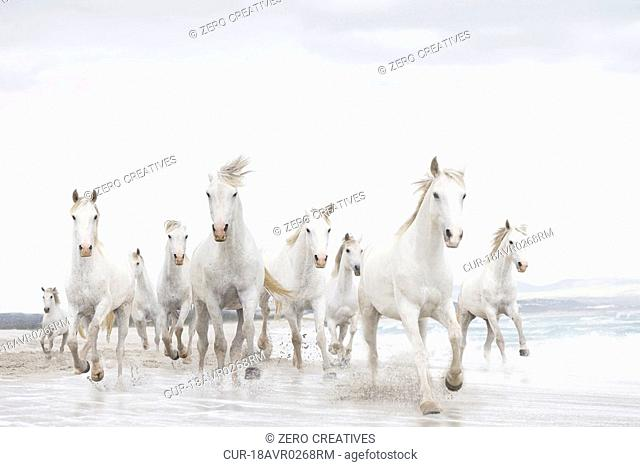 White horses, running, beach, sea, surf