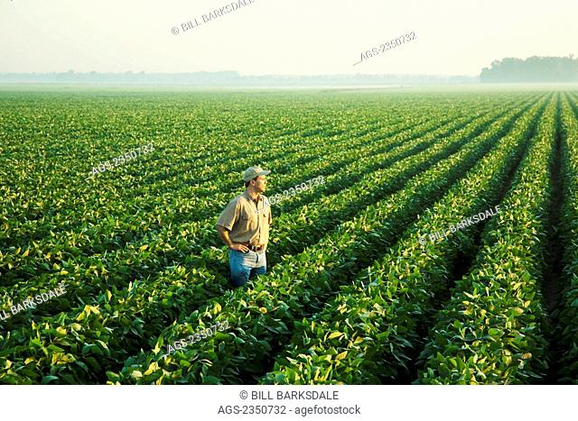 Agriculture - A farmer (grower) looks out over his field and examines his mid growth soybean crop at the mid-to-late pod set stage in hazy early morning light /...