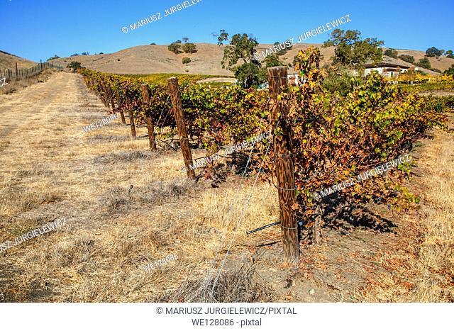 Colors of Autumn in vineyard in Santa Clara Valley