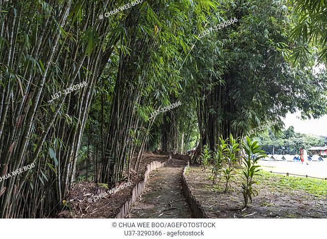 Bamboo garden at Sumiran Eco-Camp, Kuching City, Batu Kawa, Rantau Panjang, Sarawak, Malaysia
