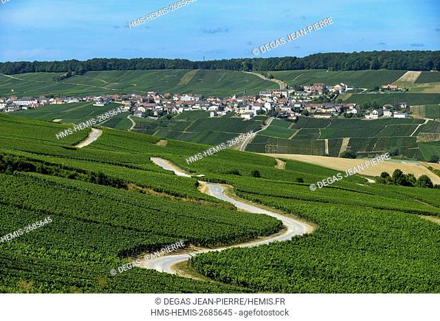 France, Marne, Cuis, Cote des Blancs, sinuous road in the middle of the vineyards of Champagne with the village of Monthelon in the background