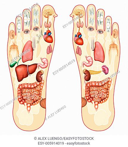 Reflexology: treatment or therapeutic manual massage consisting of pressure or massage in the different points of the soles of the feet
