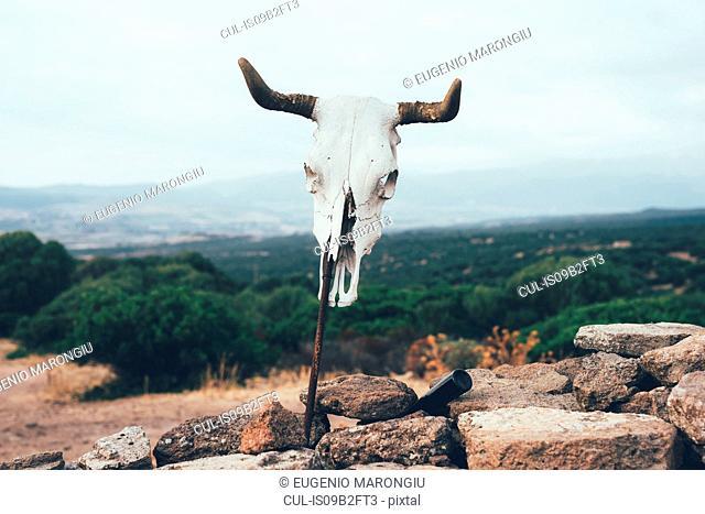 Cow skull on stick, Osilo, Sassari, Italy