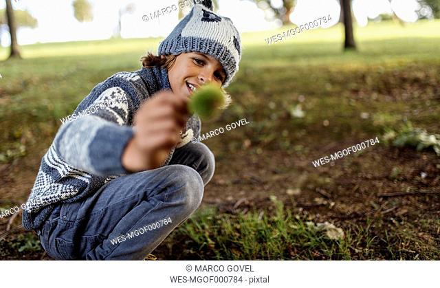 Boy holding sweet chestnut