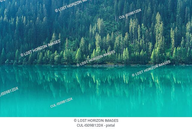 Pine trees reflected in mountain lake, St. Moritz, Canton Graubunden, Switzerland