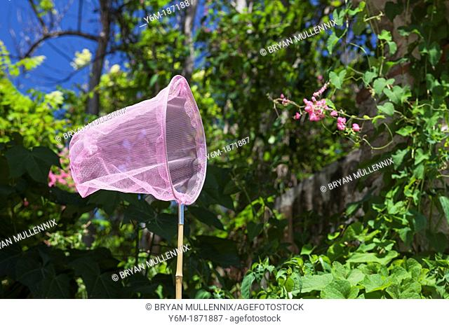 Pink butterfly net in nature, Ponce, Puerto RIco