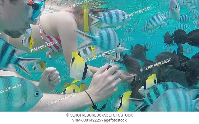 Snorkeling excursion in the shallow waters of the Bora Bora lagoon, Moorea, French Polynesia, Society Islands, South Pacific. Cook's Bay