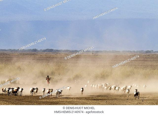 Kenya, lake Magadi, Masai cattle and a young Masai