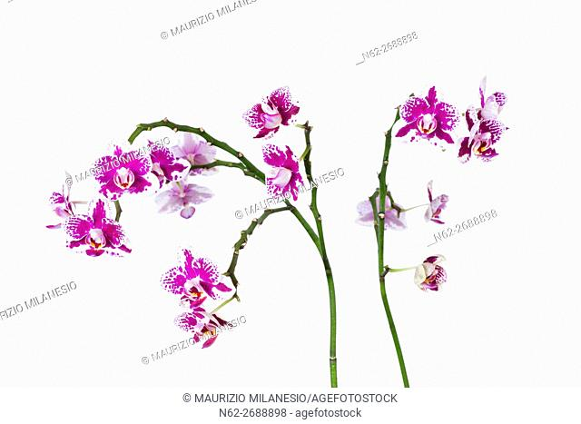 Purple orchid detail isolated on white backdrop