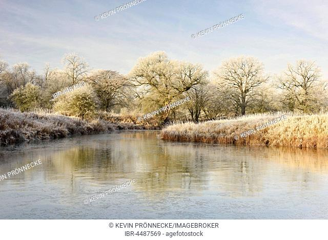 Frozen lake in the Elbe floodplain, trees with hoarfrost, Middle Elbe Biosphere Reserve, Saxony-Anhalt, Germany