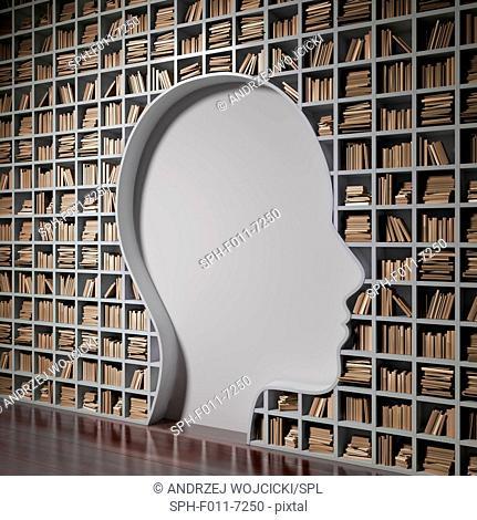Bookshelf with the shape of a human head, computer illustration