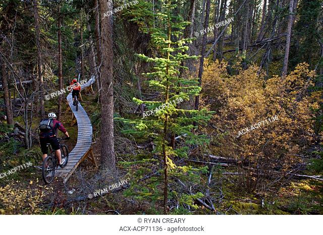Two mountain bikers enjoying the fall colors and trails in Whitehorse, Yukon