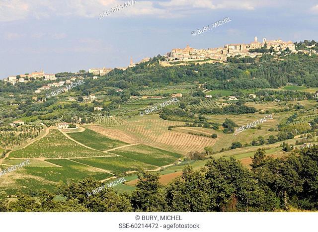 Montepulciano vines in Toscany