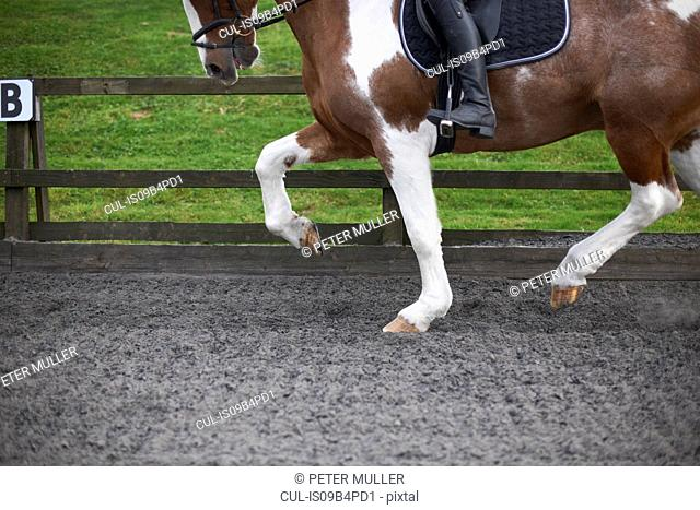 Young woman riding horse around paddock, low section
