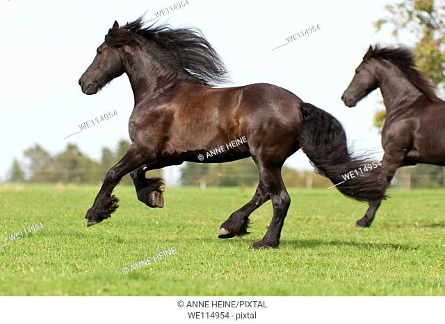 two horses gallop across green meadow