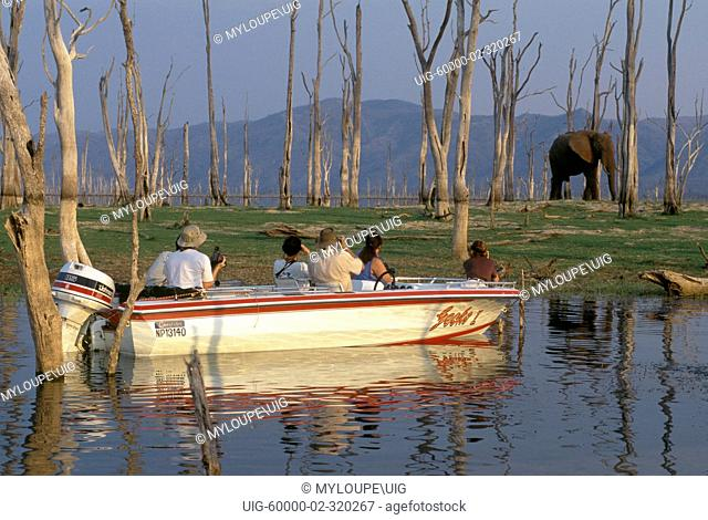 An AFRICAN ELEPHANT Loxodonta Africana near LAKE KARIBA as seen from the safety of our boat - ZIMBABWE