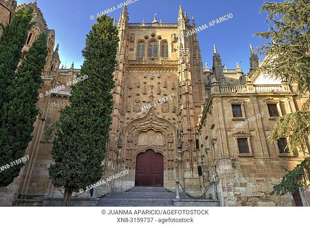 Old Catedral of Salamanca, Salamanca City, Spain, Europe