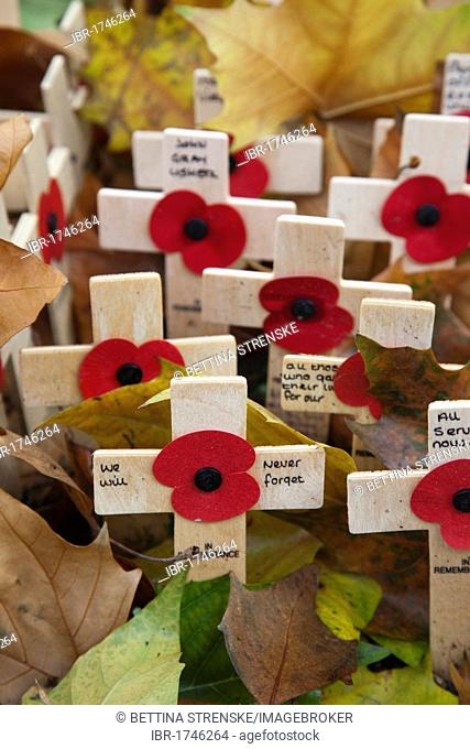 Commemorating fallen British soldiers, poppies and crosses on Field of Remembrance at Westminster Abbey, London, England, United Kingdom, Europe