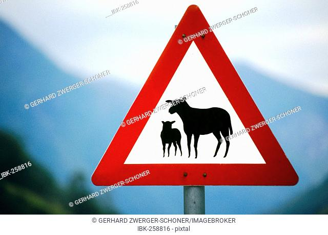Traffic sign, indication of sheep