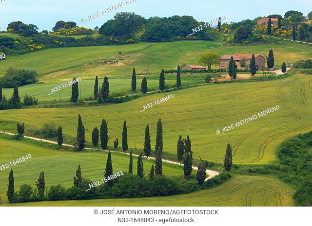 Farm with cypress trees, fields and farmhouses, Monticchiello, Val d'Orcia, Tuscany landscape, UNESCO world heritage site, Siena Province, Tuscany, Italy