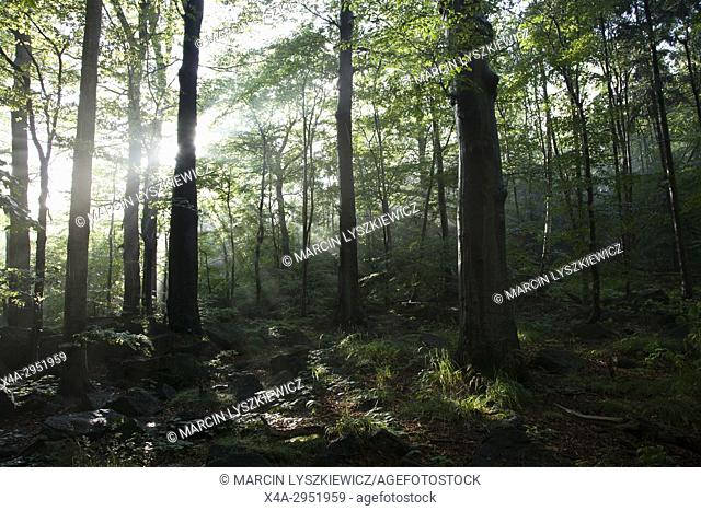 Deciduous Forest in Western Poland