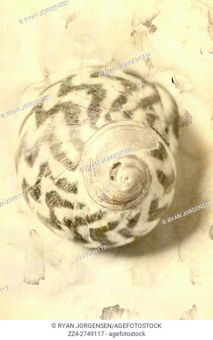 Macro nautical still-life photo of a old sea shell with spiral pattern and stripes
