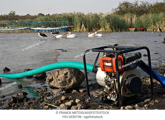 Electric water pump + marabou storks, pelicans, tourist boats in the background. Lake Ziway ( Oromiya state, Ethiopia). The water pump is used by a local...