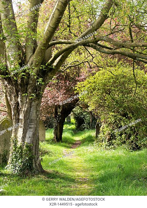 A treelined path through the historic Old Cemetery on the Common in Southampton, England