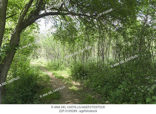 Spring Gudar mountains Teruel Aragon. Spain. Poplar forest