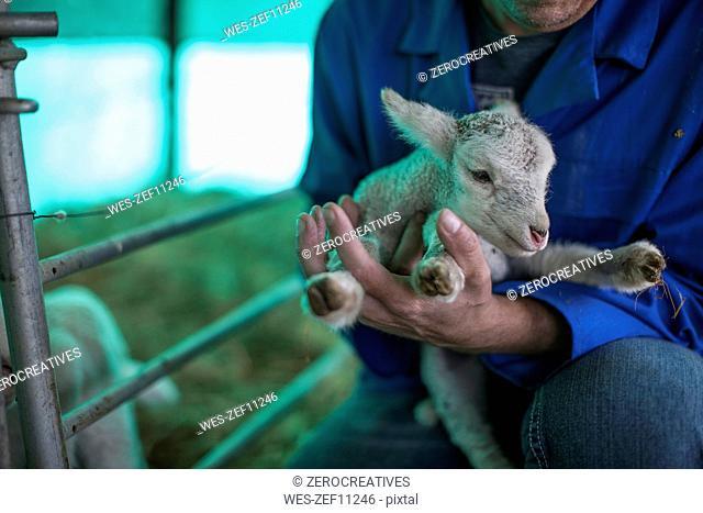 Man holding little lamb on farm