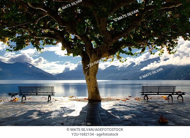 Tree and benches close to the lake with mountains