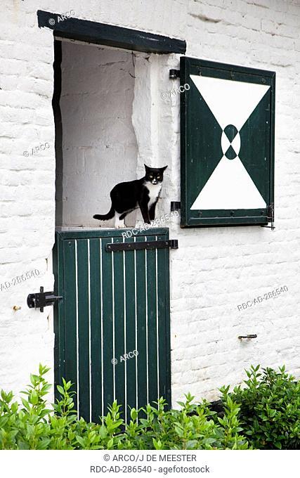 Domestic Cat, half open stable door, Belgium